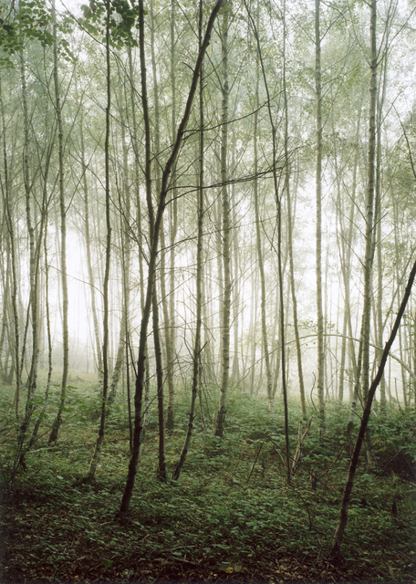 , 'Forest #36, Untitled (Audience),' 2003, Yancey Richardson Gallery