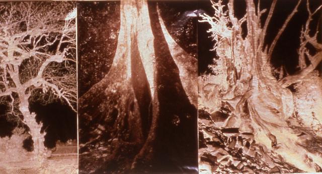 Meridel Rubenstein, 'Brocade', 2000, Brian Gross Fine Art