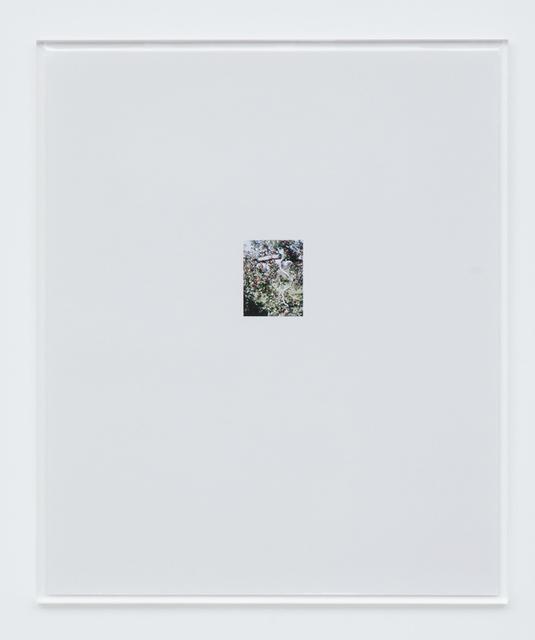 , 'Apple Tree 1,' 2017, Tomio Koyama Gallery