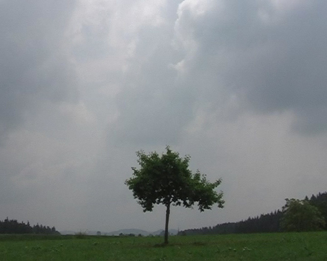 Michael Sailstorfer, 'Raketenbaum 1 Video', 2008, KÖNIG GALERIE