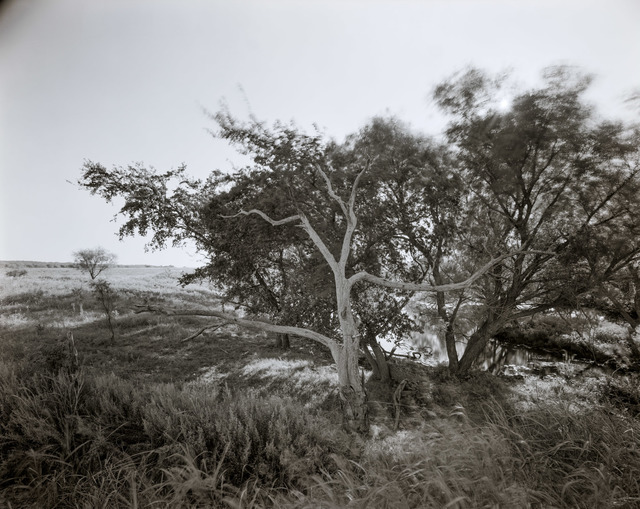 , 'Dead Tree, Stock tank, south of Jacksboro, Texas, July 1986,' 1986, Fort Worth Contemporary Arts