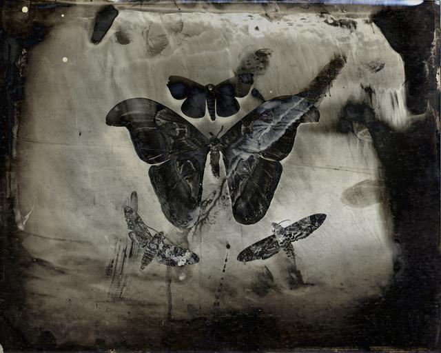 , 'Four Moths,' 2011, Etherton Gallery