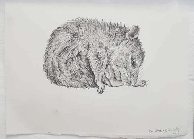 , 'Rat, Waveney River, Suffolk,' 2016, James Freeman Gallery