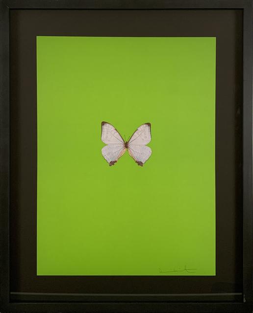 Damien Hirst, 'Six Butterflies II', 2011, DTR Modern Galleries