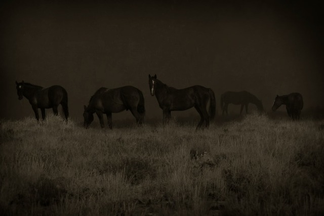 , 'Wild Horses Wyoming 1/10,' , Gail Severn Gallery