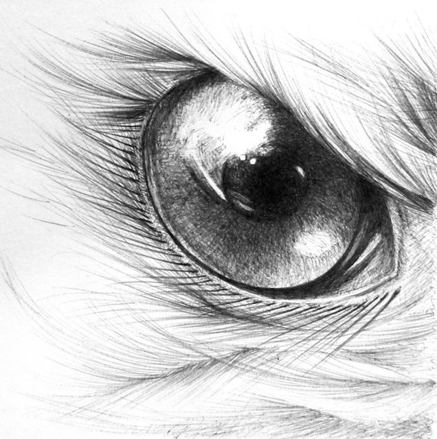 , 'Eagle Eye,' 2014, Adah Rose Gallery