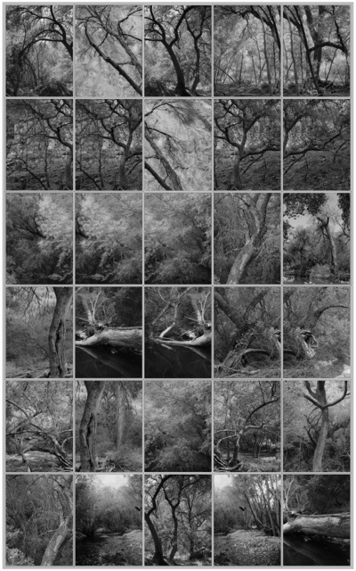 Michael Berman, 'Canyon Bonito, from Perdido', 2016, Etherton Gallery