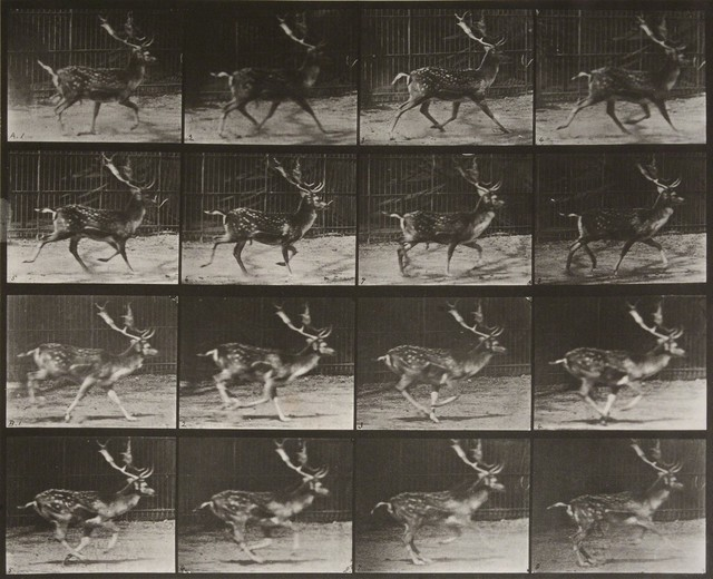 , 'Animal Locomotion: Plate 682 (Stag Running),' 1887, Huxley-Parlour