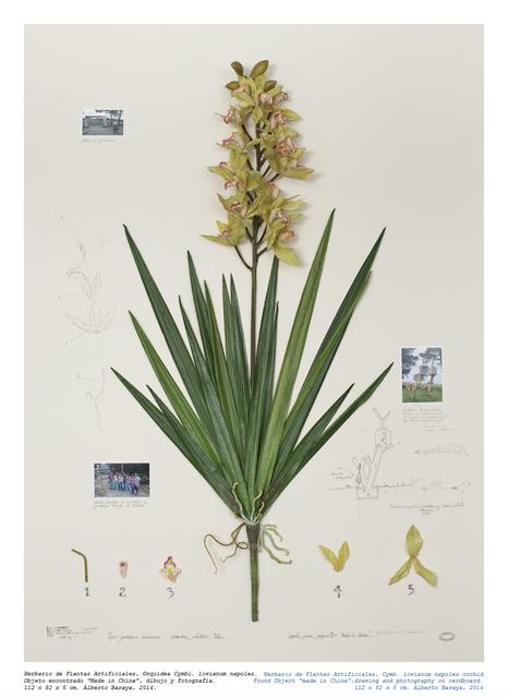 , 'Orquidea Cymbi. Iowianum napoles - Herbario de Plantas Artificiales,' 2014, Instituto de Visión