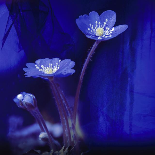 Maya Eizin Öijer, 'Blue Spring', 2009, Photography, Photography mounted behind diamond glass, Andréhn-Schiptjenko