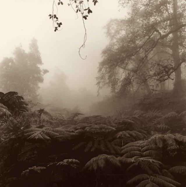, 'Kalopa Forest,' , Tiffany's Art Agency