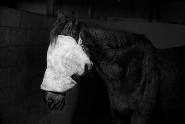 Tom Callemin, 'Horse', 2019, Galerie Zink