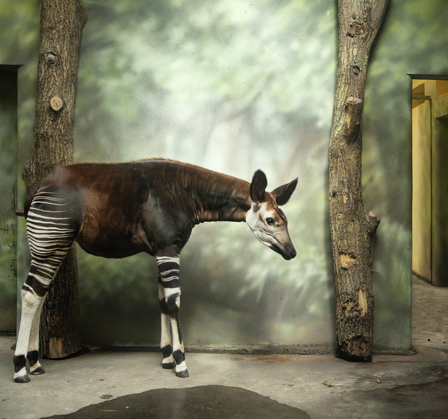 , 'Okapi and Forest,' , Galerie Dumonteil
