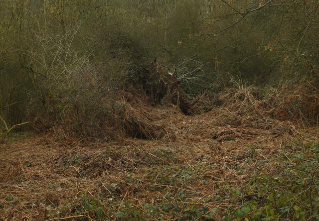 Leon Steele, 'Heath #12', 2011, Wren London