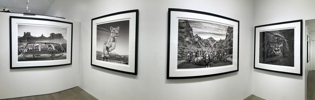 David Yarrow: Off Road & After Hours: The Break Up, 2018; Emma, Dinokeng, South Africa, 2017; The Leader of the Pack, 2019; Kong, 2019