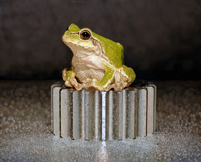, 'Nothing.Life.Object (Frog on Bolt),' 2014, Plus One Gallery