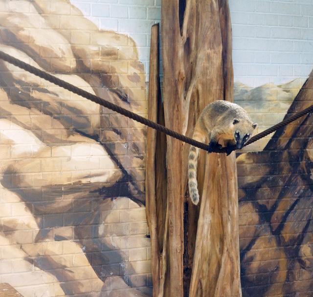 , 'Coati and Stones,' , Galerie Dumonteil