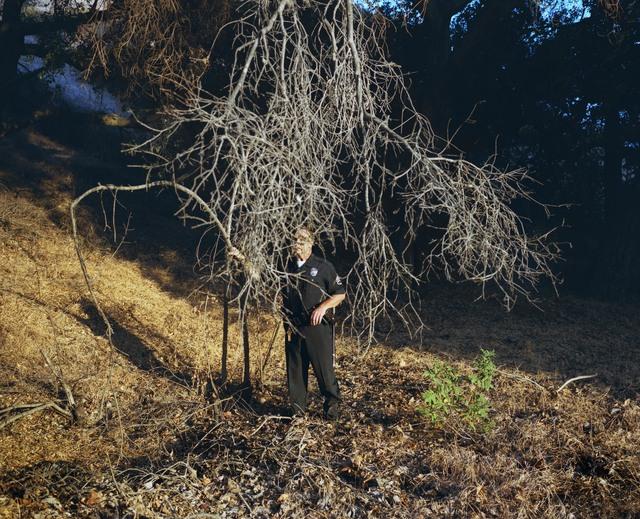 , 'Tree,' 2017, Cecilia Hillström Gallery