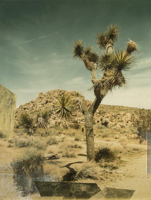 , 'Joshua Tree,' 2018, Kahn Gallery