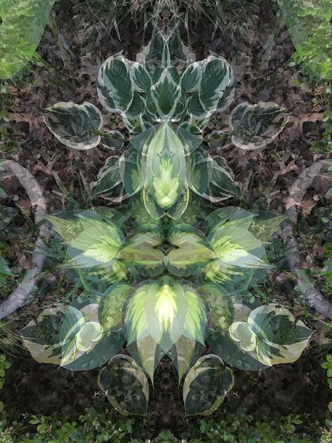 Jeanne Wilkinson, 'Spring Symmetry ', 2019, Photography, Digital Collage, bG Gallery