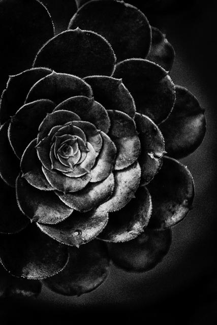 , 'Untitled #6,' , Soho Photo Gallery