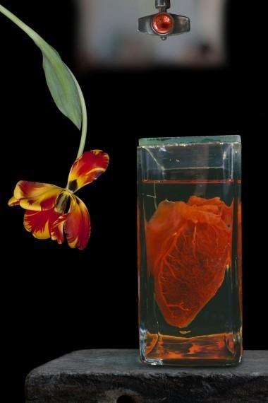 , 'Heart and Flower,' 2010, Scheinbaum & Russek Ltd.