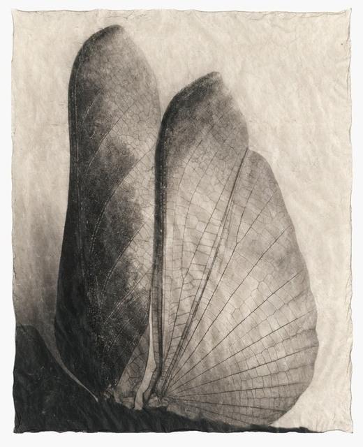 , 'Wing Wing No. 2,' 2016, Galerie Commeter / Persiehl & Heine