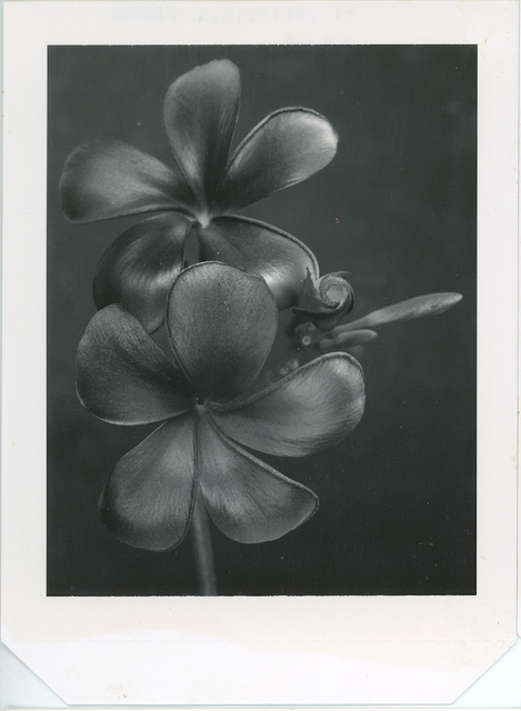 Gian Paolo Barbieri, 'Black frangipani, Milano ', 2008,  29 ARTS IN PROGRESS gallery