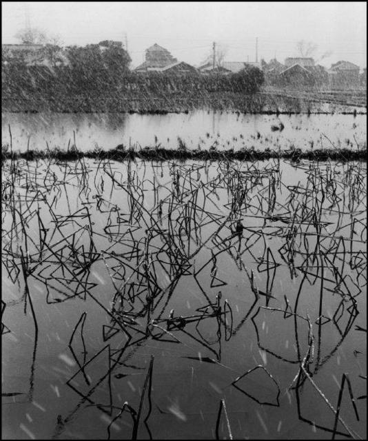 Werner Bischof, ' Rice field covered with lotus plants during the winter Japan, Tokyo', 1951, Magnum Photos