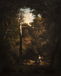 Arbres morts en forêt, bucheronne sur le chemin