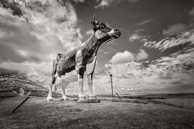 , 'World's Largest Holstein Cow, New Salem, North Dakota,' , Soho Photo Gallery