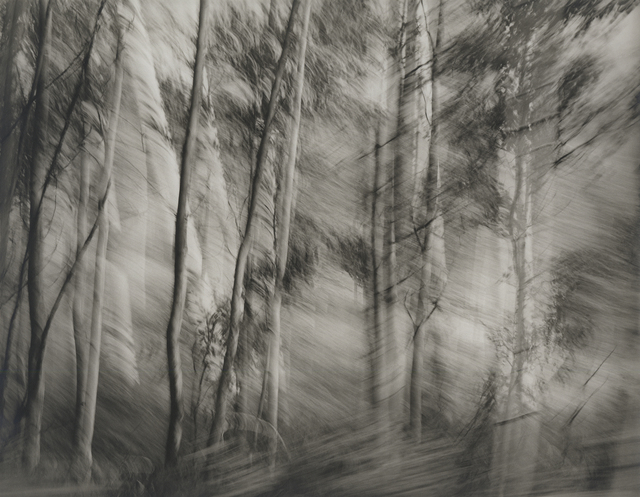 , 'Untitled, Point Lobos,' 1970-1979, Photography West Gallery