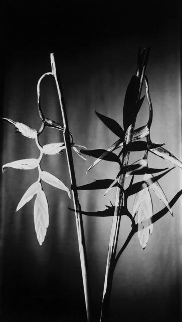 , 'Schatten V,,' 2016, GALERIE BENJAMIN ECK
