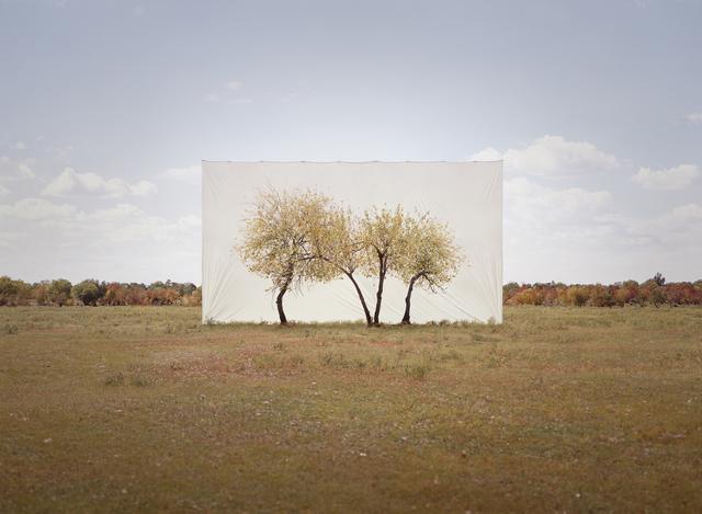 , 'Tree…#4,' 2013, Yossi Milo Gallery
