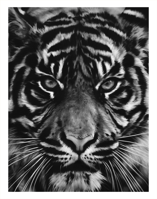 , 'Untitled (Tiger Head 2),' 2014, Adamson Gallery