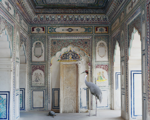 "Karen Knorr, 'Amrita's Message, Nagaur Fort, Nagaur. From the series ""India Song""', 2012, Danziger Gallery"