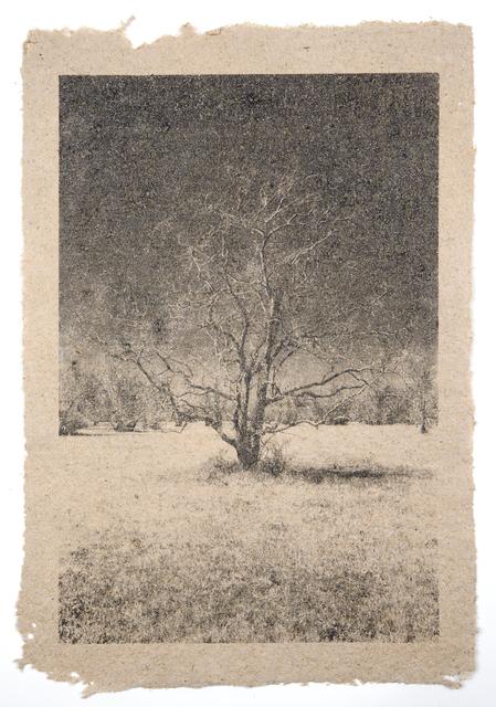 , 'Tree 30,' , Tracey Morgan Gallery