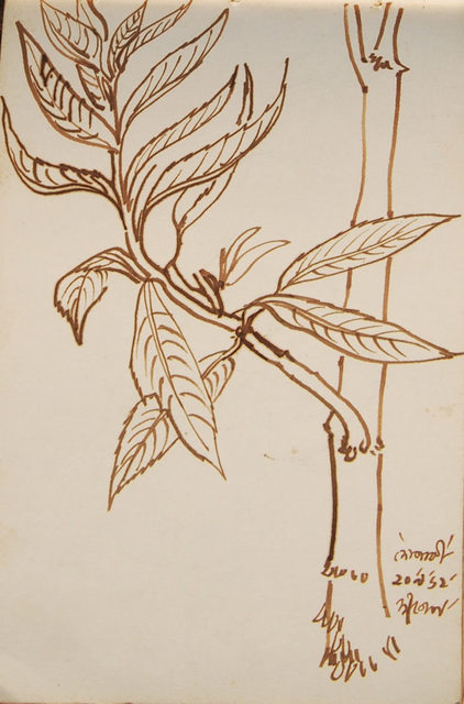 , 'Dopati, flower drawing in watercolor & washes by Bengal School Artist Dipen Bose, influenced by Artist Indra Dugar,' 1962, Gallery Kolkata
