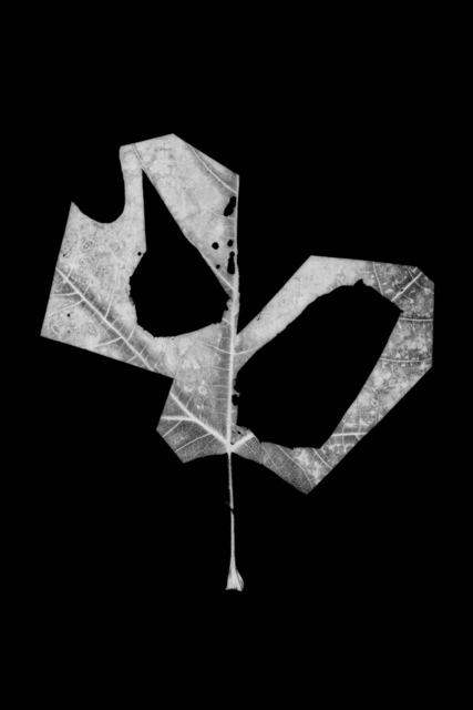 , 'Leaf-cut 11,' 2016, Grundemark Nilsson Gallery