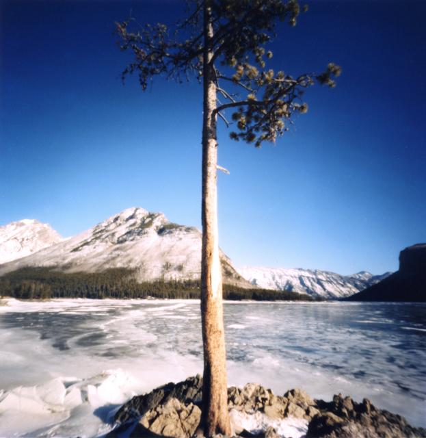 Dianne Bos, 'Lake Minnewanka, Tree', 2012, Newzones