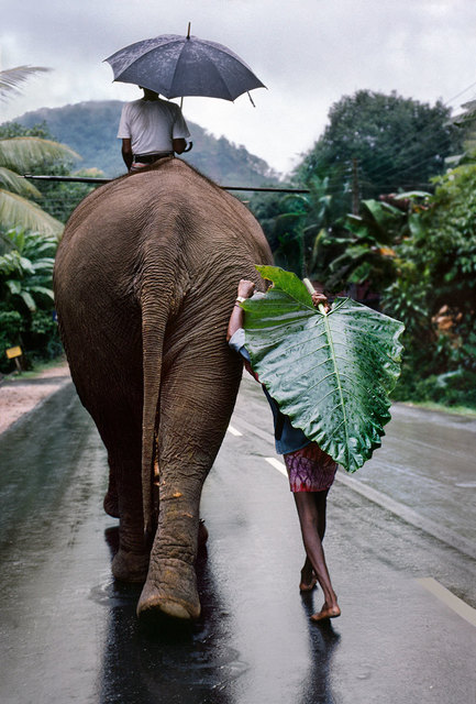 , 'A young farmer walks next to an elephant, Kandy, Sri Lanka,' 1995, Sundaram Tagore Gallery