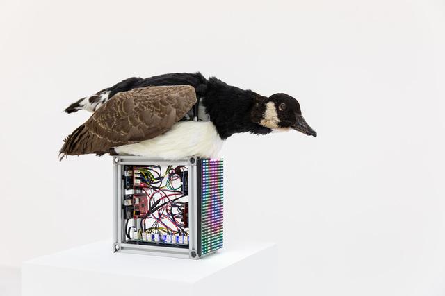 , 'Jacques de Vaucanson's Digesting Goose 1739,' 2019, HATCH ART PROJECT