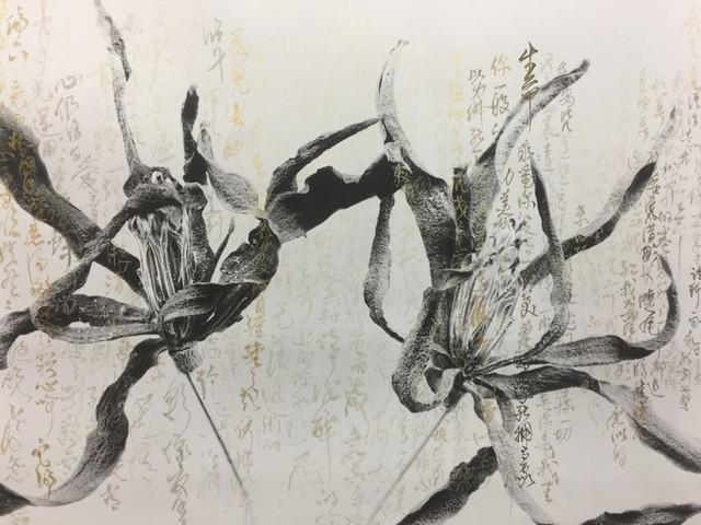 , 'Magnolia-Byron-Gold 白兰花-拜伦-金,' 2010-2017, iPreciation