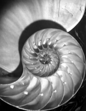 , 'Nautilus Pompileus II,' 1945, Staley-Wise Gallery