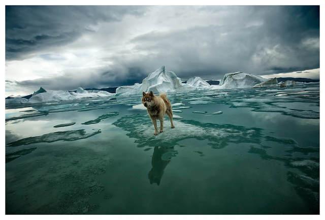Sebastian Copeland, 'Zephyr, Artica', 2008, Photography, Archival Pigment Print, Bernheimer Fine Art