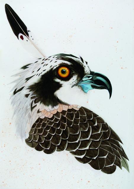 , 'Osprey,' , Dowling Walsh