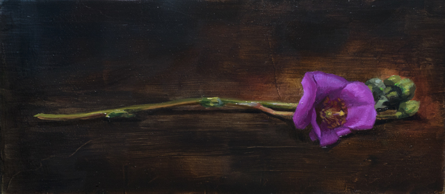 Robin Cole, 'Gentian', 2018, Painting, Oil on panel, Gallery 1261