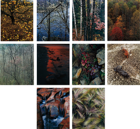 Eliot Porter, 'Intimate Landscapes,' , Phillips: Photographs (April 2017)