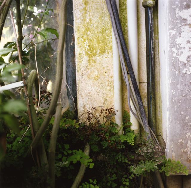 , 'Padua Botanical #4,' 2013, Newzones