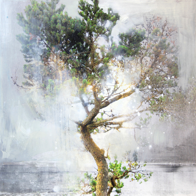 , 'Tree in the Fog 2,' 2018, Foster/White Gallery
